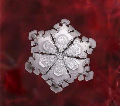 Artistic Snowflake Shapes 3