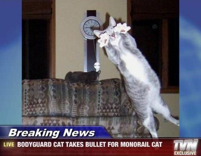 Breaking News BodyGuard Cat
