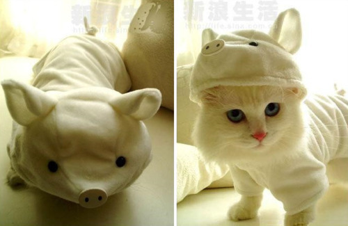 Cat In A Cute Piggy Costume