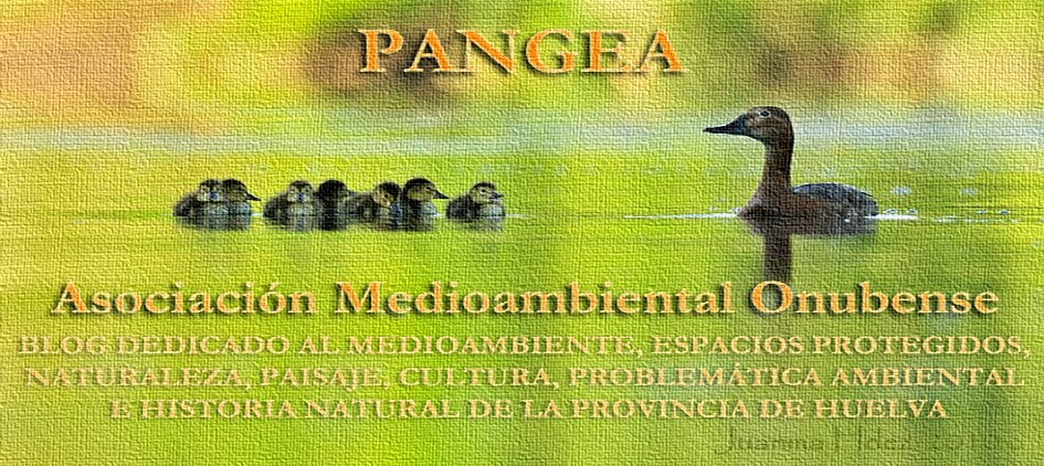 PANGEA, ASOCIACIÓN MEDIOAMBIENTAL ONUBENSE