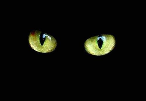 Las supersticiones mundiales mas comunes 223098gato-negro