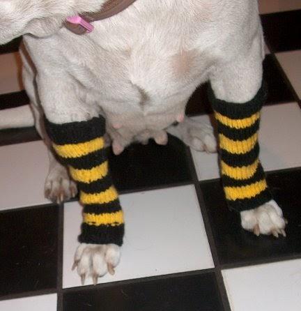 Dog Leg Warmers Knitting Pattern : hermione j. schwartz: Mouses Steelers Striped Leg Warmers: Knit Pattern