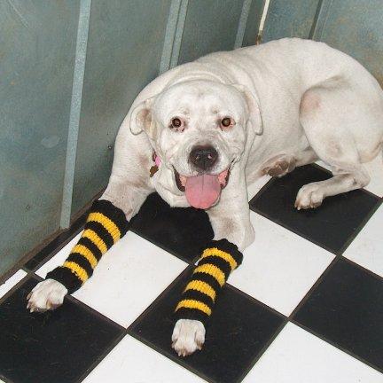 Knitting Patterns For Dog Leg Warmers : hermione j. schwartz: Mouses Steelers Striped Leg Warmers: Knit Pattern