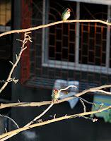 Mumbai Birds