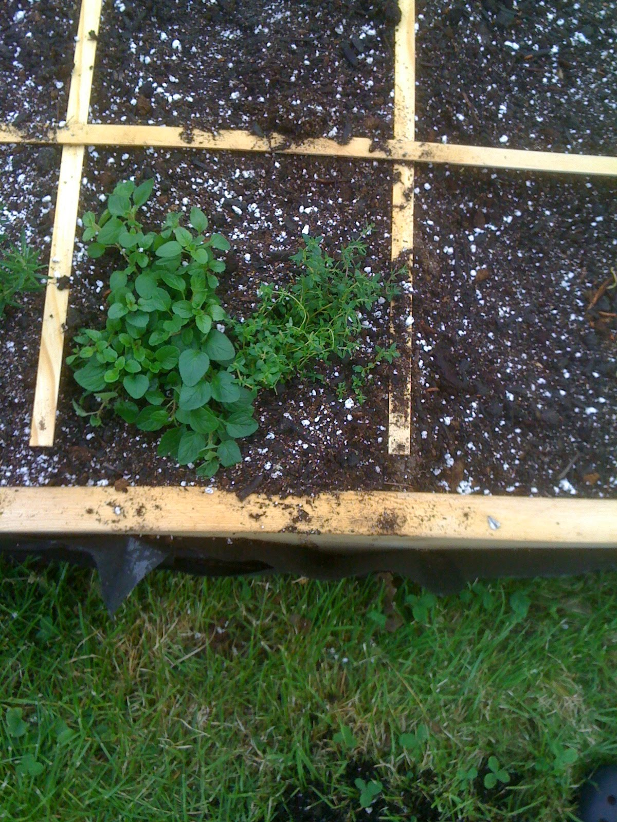 Katy 39 S Square Foot Garden Herbs And Strawberries And Beans Oh My