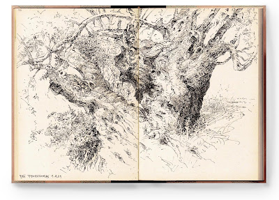 olive tree drawing by Albrecht Rissler