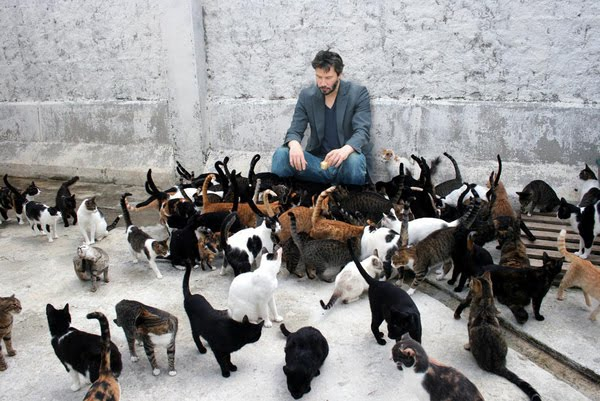 [Image: cats+and+keanu.jpg]