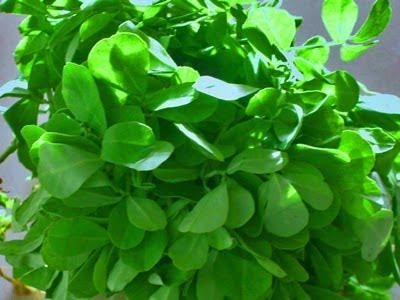மாரடைப்பை குணப்படுத்தும் வெந்தயக் கீரை Fenugreek+leaves