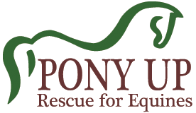 Pony Up Rescue for Equines Blog