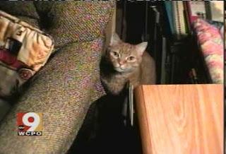 http://1.bp.blogspot.com/_QKWok61IOLw/RYWsKl7_ERI/AAAAAAAAAFc/jND6gQe-WIs/s320/EraseMe+Tommy+cat.jpg