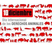 10 de Diciembre- Día internacional de los derechos animales