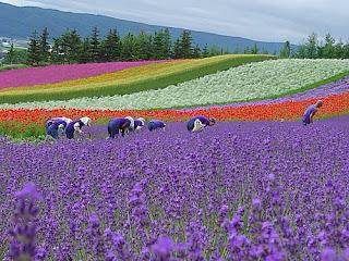 farm fomita in nak furano