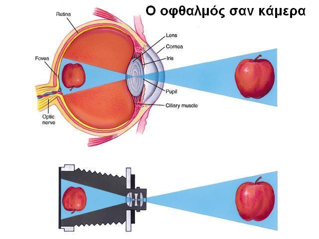 http://1.bp.blogspot.com/_QMD3uDrxxgM/S871kyKxcgI/AAAAAAAAIAM/59rZmER38vk/s1600/eye-camera.JPG