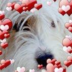 Mi perro Zizou