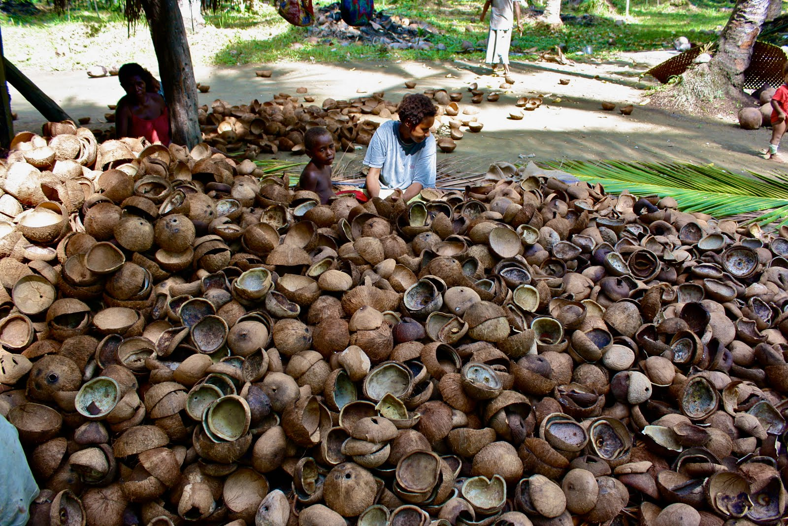 the philippines coconut copra industry Coconut industry in png economy ➢ coconut area:  copra australia &  philippines coconut oil netherlands, germany & uk copra meal.