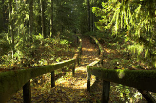 Golden Ears Park, British Columbia, Canada