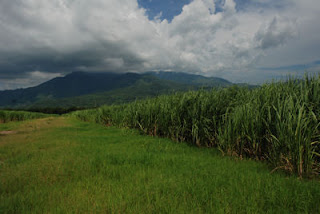 Honduras Sugar Cane Fields, Honduras, Central America