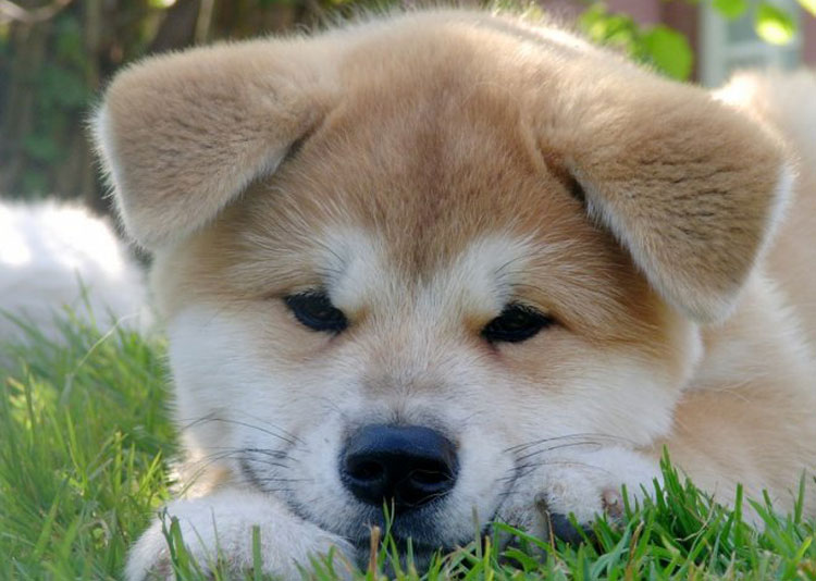 Los perros mas tiernos - Taringa!