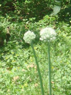 First Life 360 - A blog of humor, nature and spirituality