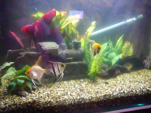 Aquarium Dream Aquarium As It Is