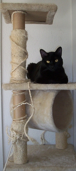 elegance is key when it becomes time to make a purchase for our furry friends kitty jungle gyms are no exception and i would consider them among one of - Cat Jungle Gym