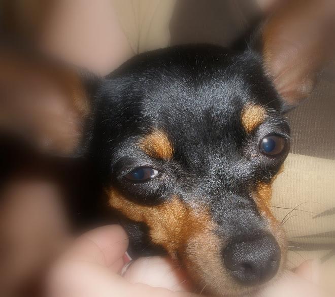 Se llama Lola