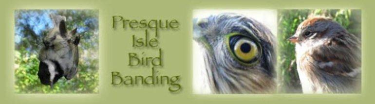 Presque Isle Pa. Presque Isle State Park Bird