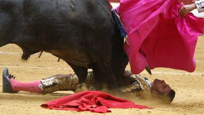 foto cogido toro: