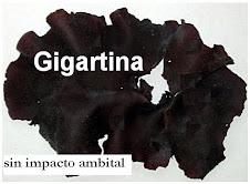 Gigartina seca