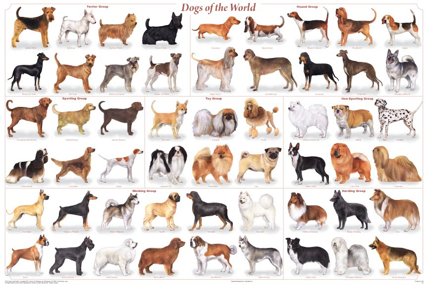 the target dog breed. dog breeds of world poster. to