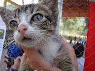 miauuuuuu, ley de protección animal... YA...