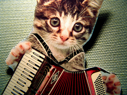 [accordian+kitty]