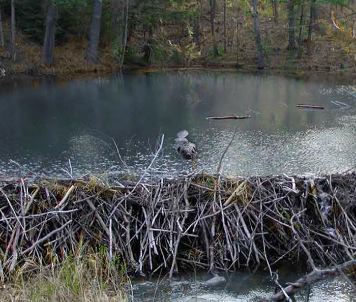 beaver-dam-insurance.jpg