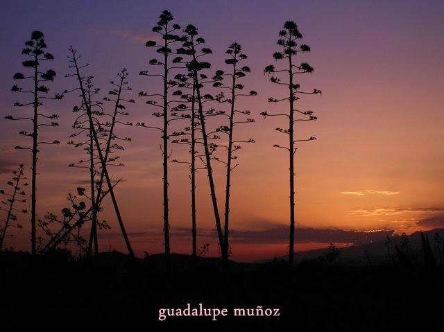GUADALUPE MUÑOZ GORDILLO