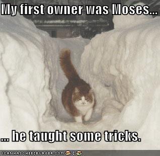 http://1.bp.blogspot.com/_QaaTJ2jt560/Sa1lMXF8EgI/AAAAAAAAE5g/ETovEpW9y-E/s400/funny-pictures-cat-can-part-snow.jpg