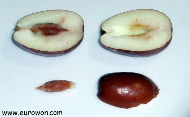 Corte del fruto de la azufaifa para ver la pepita