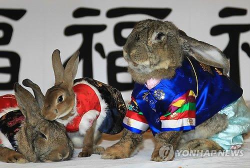 Conejos vestidos con hanbok, el traje típico coreano