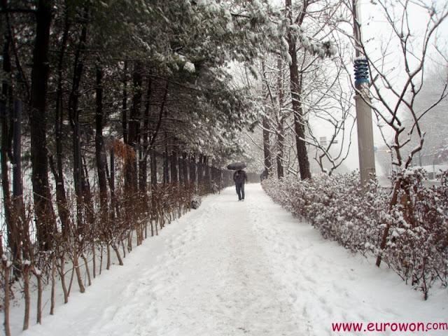 Coreano con paraguas bajo la nieve