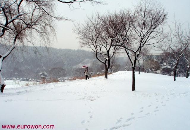 Nieve en la Universidad Nacional de Seúl