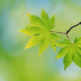 Gambar-gambar daun yang indah