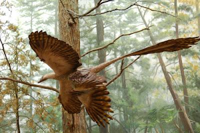 Reconstrucción de un Microraptor en vuelo