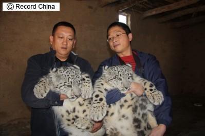 [snowleopardkittens-1.jpg]