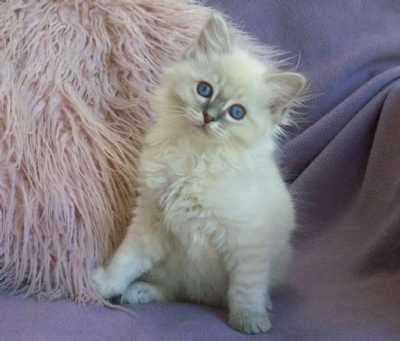 A staring cute kitten