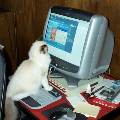 A Ragdoll Cat Doing Some Online Shopping