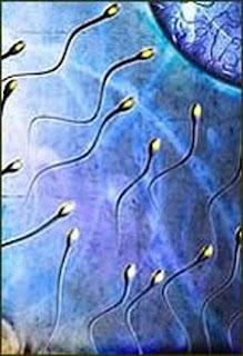 Kelahiran Manusia Di Bumi