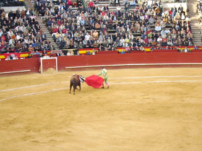 bullfight during Fallas