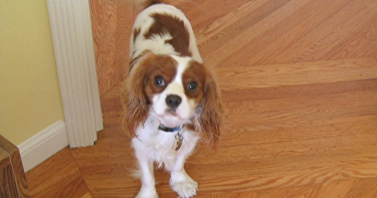 Dog Home Visit In Uk
