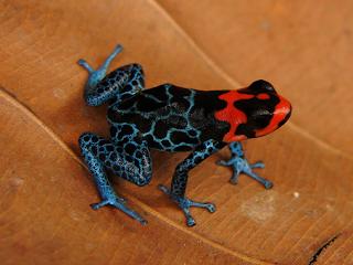 New+species+ +sebuah+catatan+%282%29 Binatang binatang Menakjubkan Asal Hutan Amazon