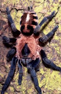 New+species+ +sebuah+catatan+%284%29 Binatang binatang Menakjubkan Asal Hutan Amazon