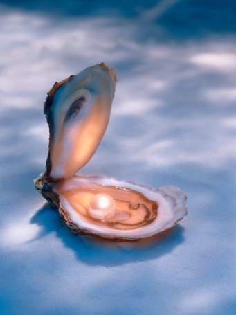 [pearloystersd3.jpg]